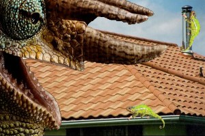 Shingles Integrity Roofing And Painting